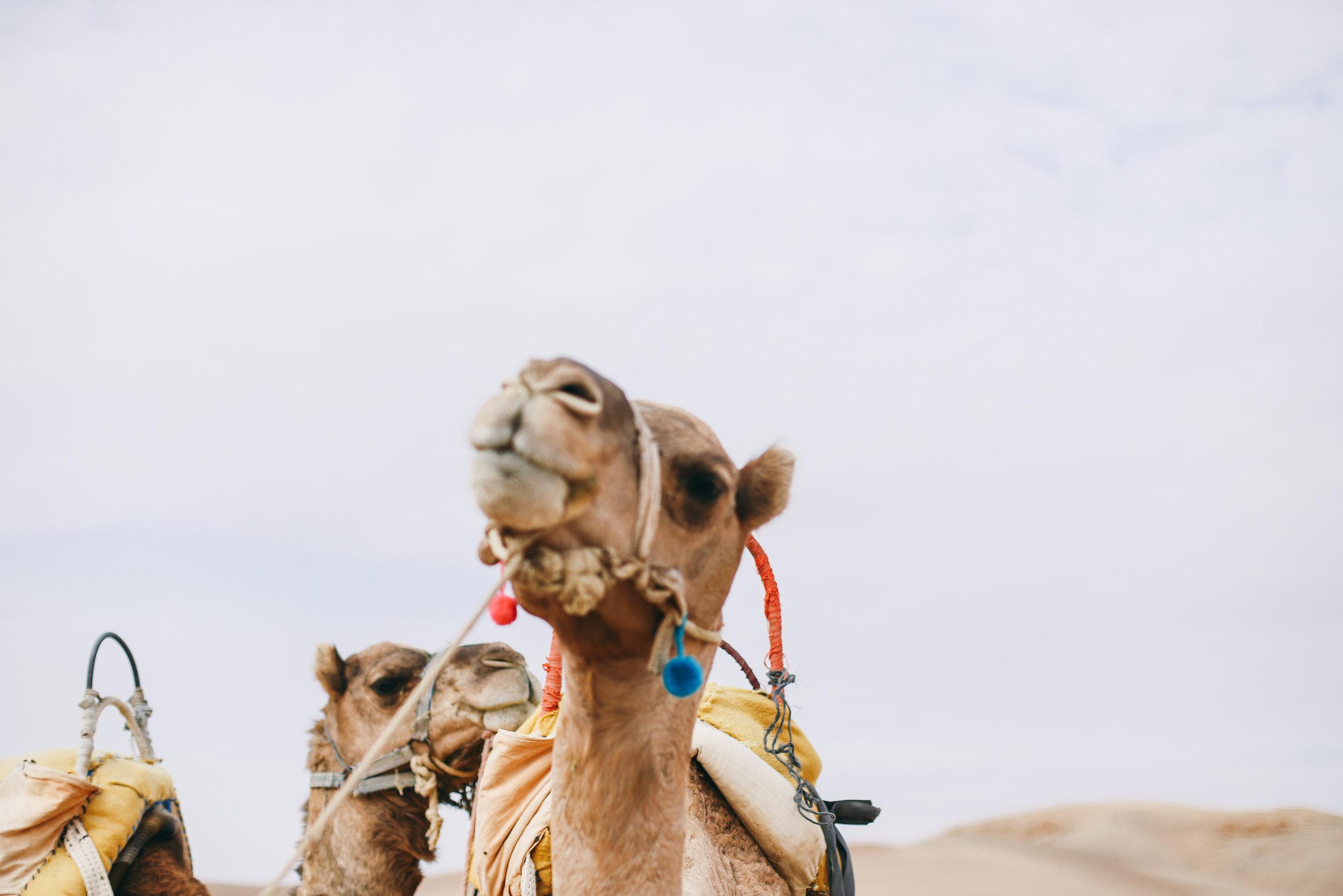weare.morocco.leia.10.17-168.jpg