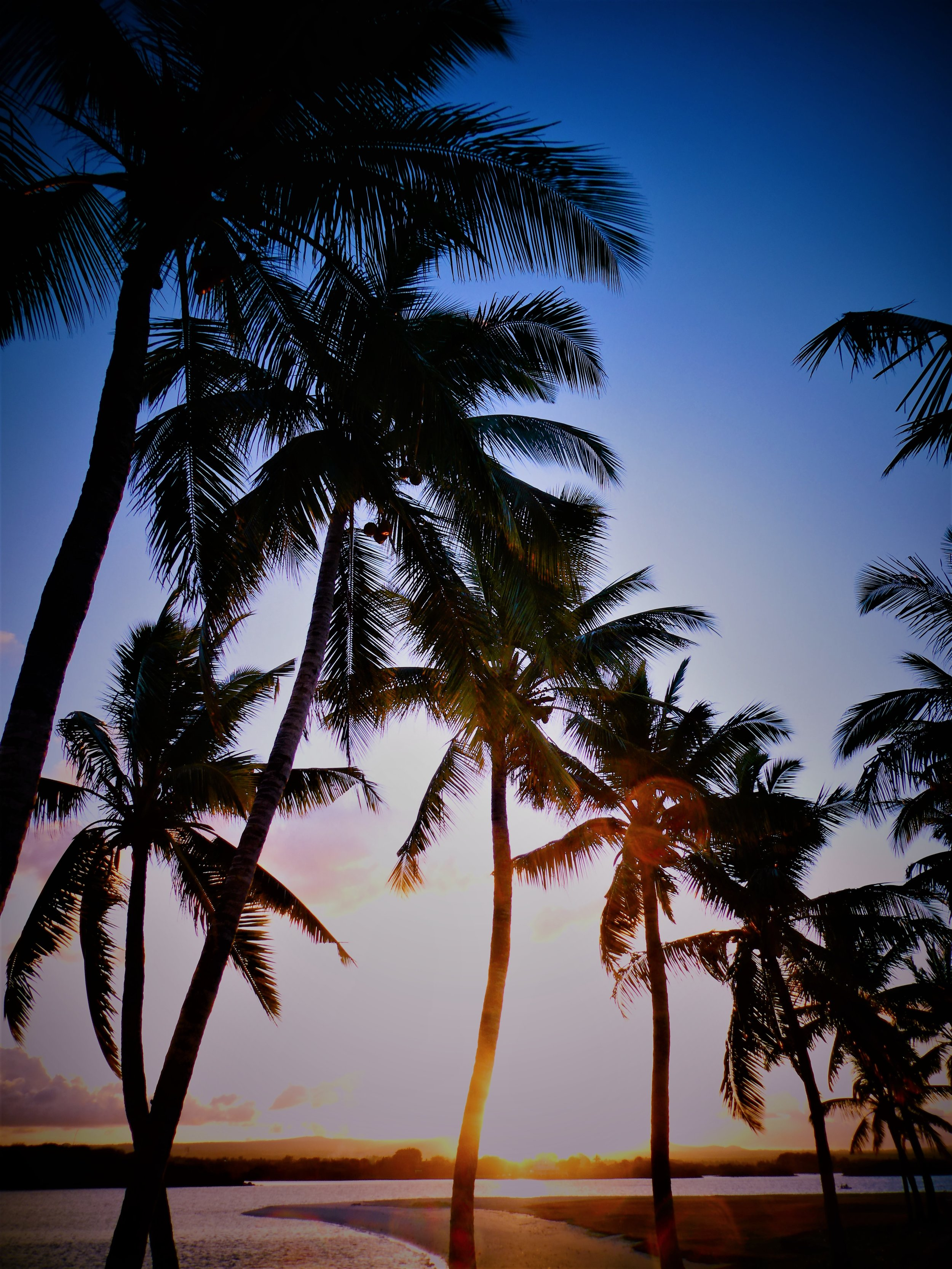 sunset palms in rouge.jpg