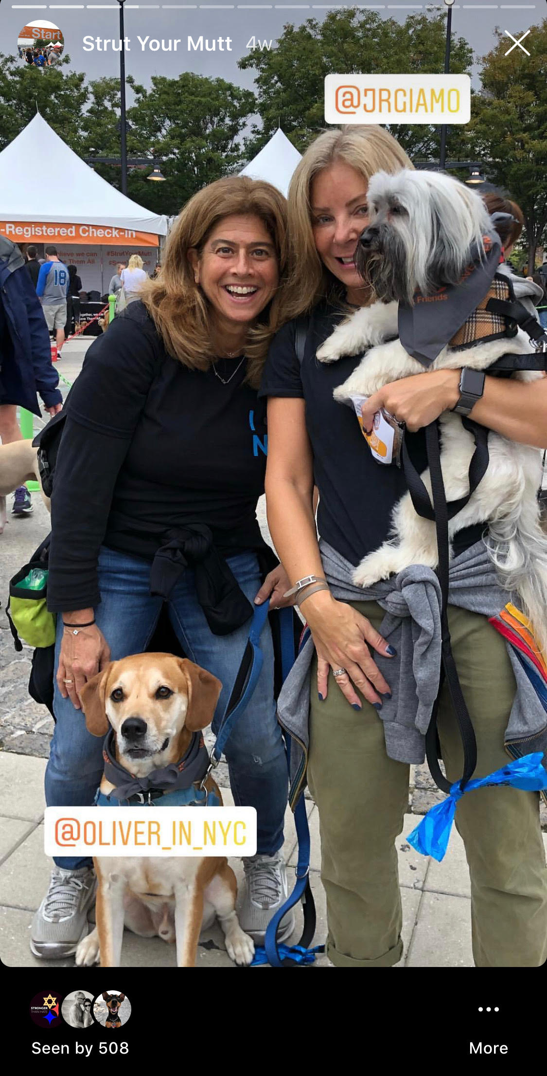 Click the image above to view @animal_lighthouse's Instastory from Strut Your Mutt '18