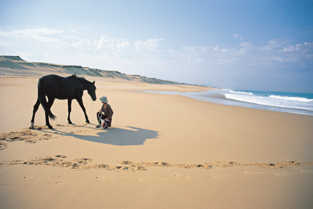 photo_Aroyan_photo_Aroyan-Horse_on_Beachweb.jpg