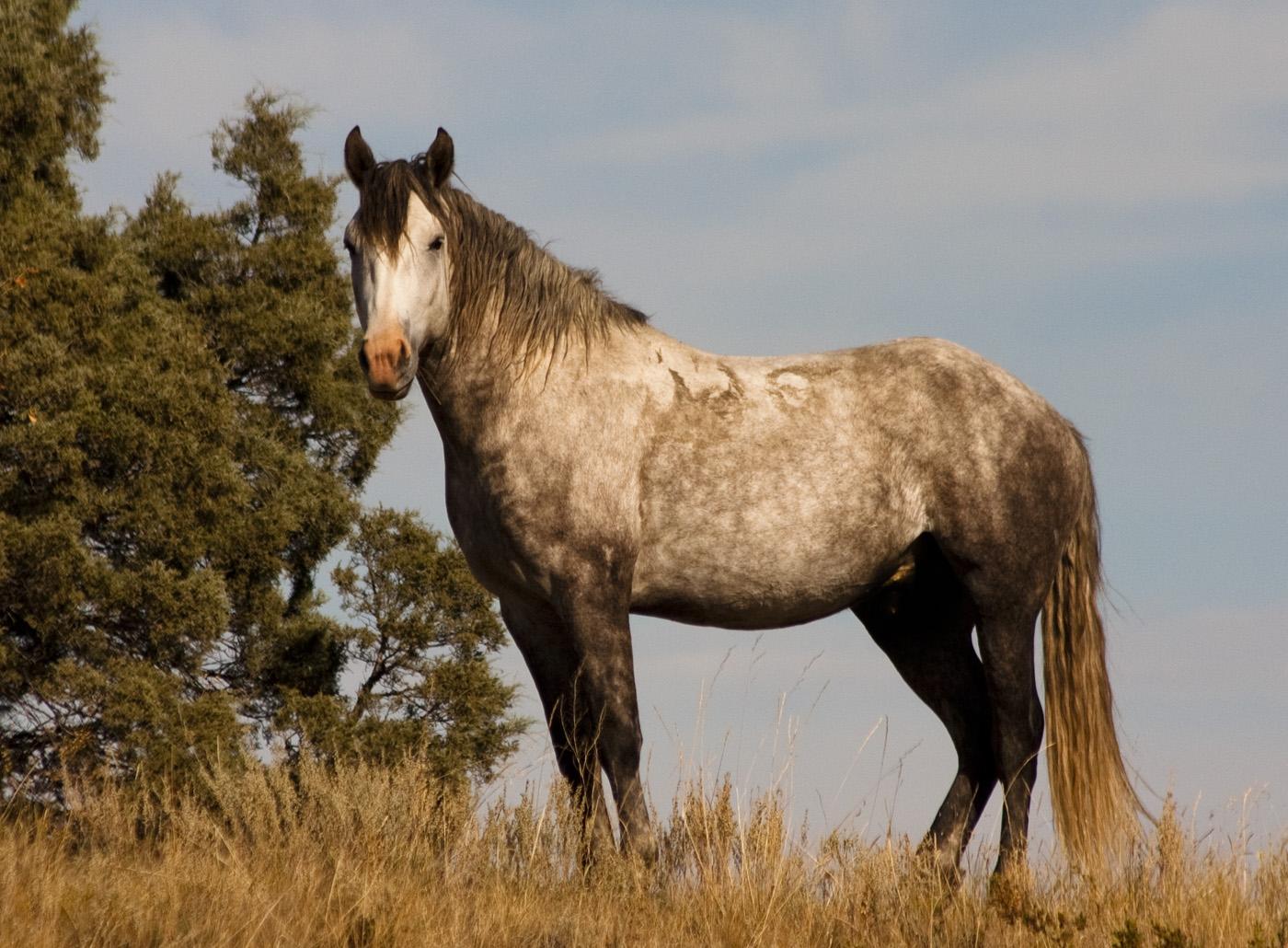 hemp-oil-for-horses-feeding-hemp-oil-hemp-equine-hemp-oil