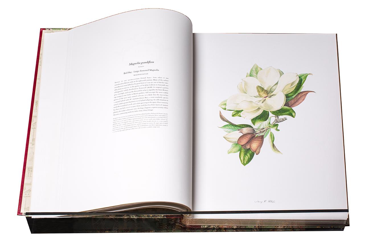 HF Magnolia, Phillips.jpg