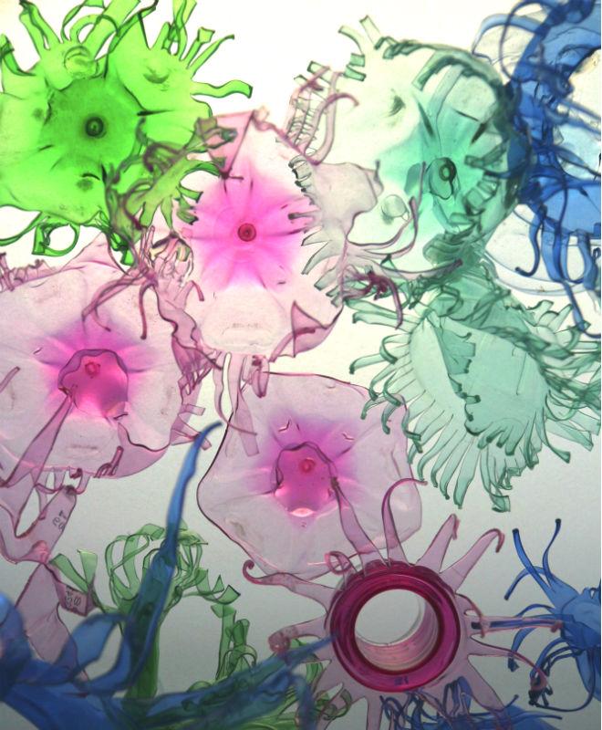 koralle2.jpg