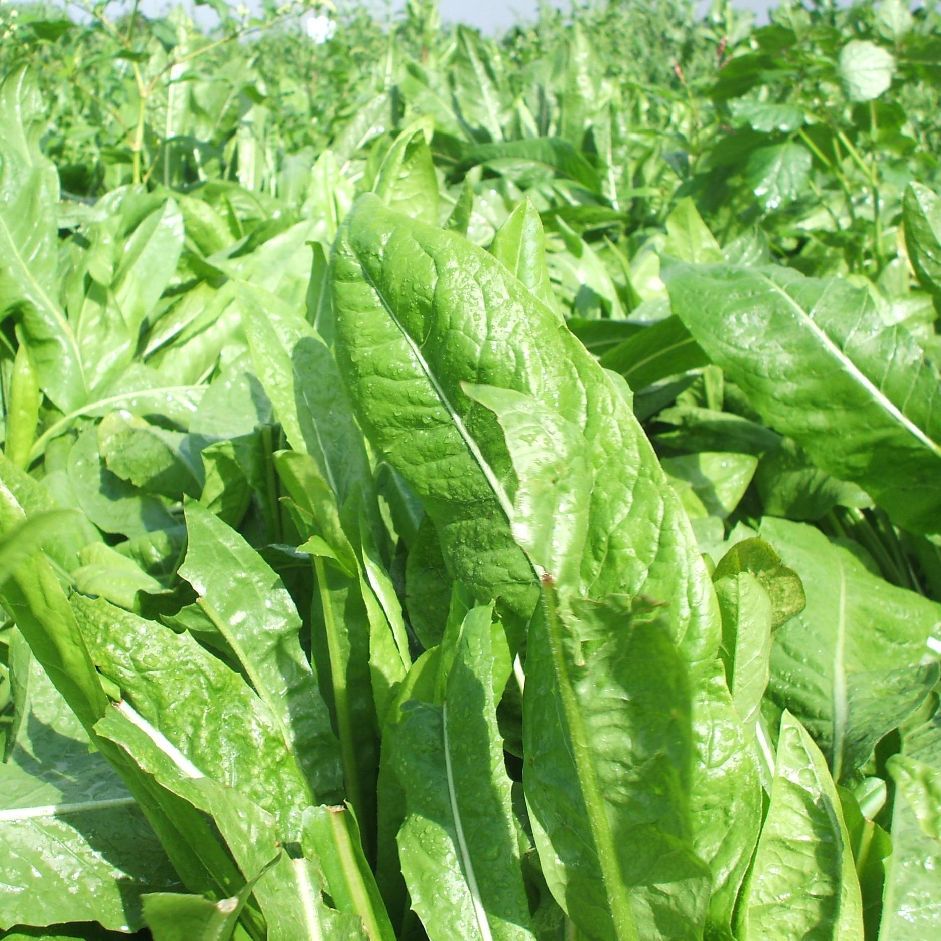 foddercrop.jpg