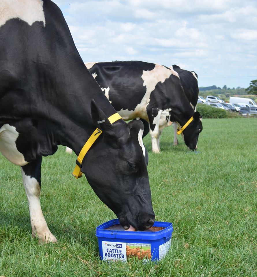 cattlebooster.jpg