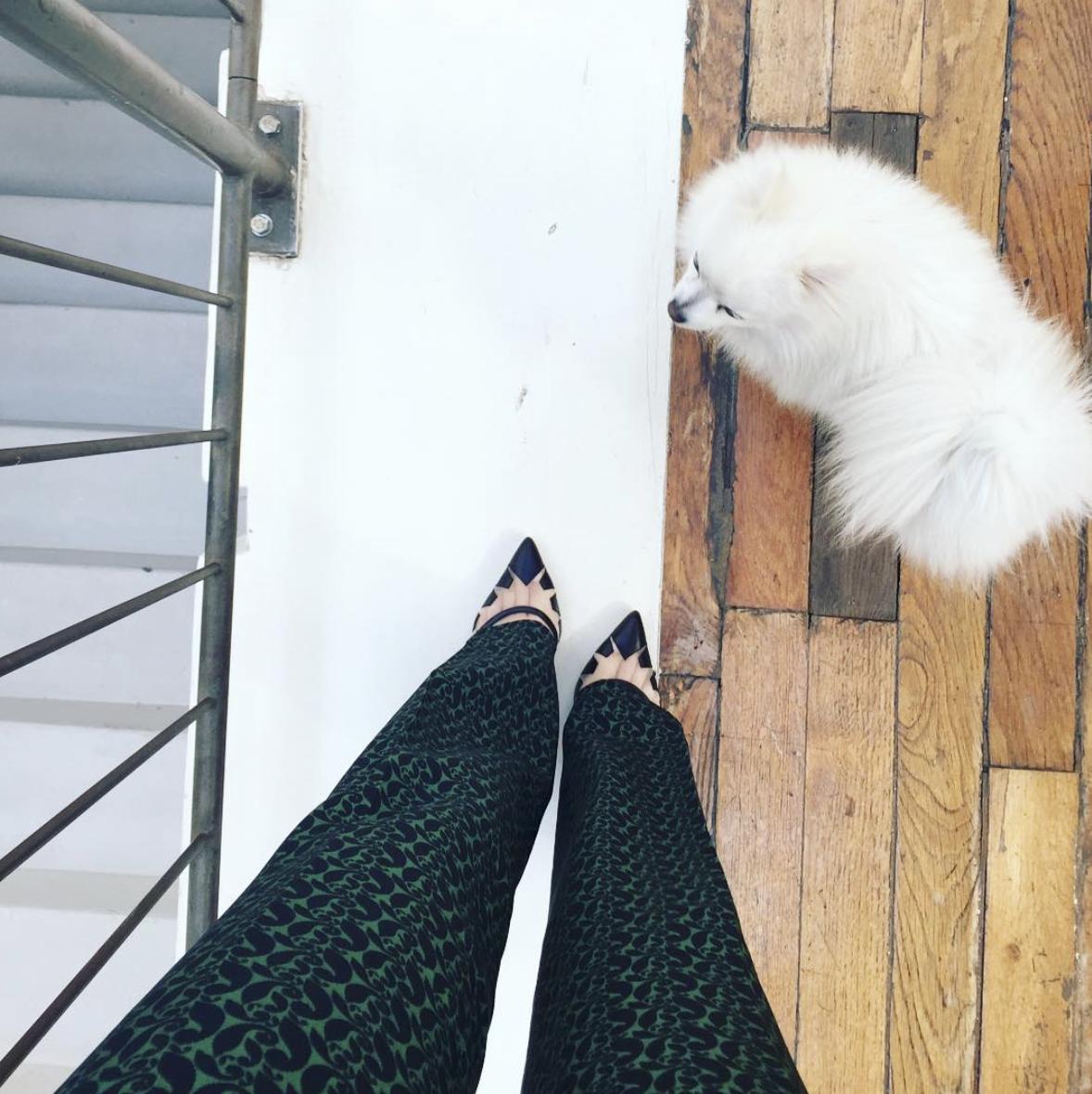 @ catherinepdv   ça va Violette? 🐩  #pfw  #puppy   #paris   #giuliettanewyork   #girlinBC