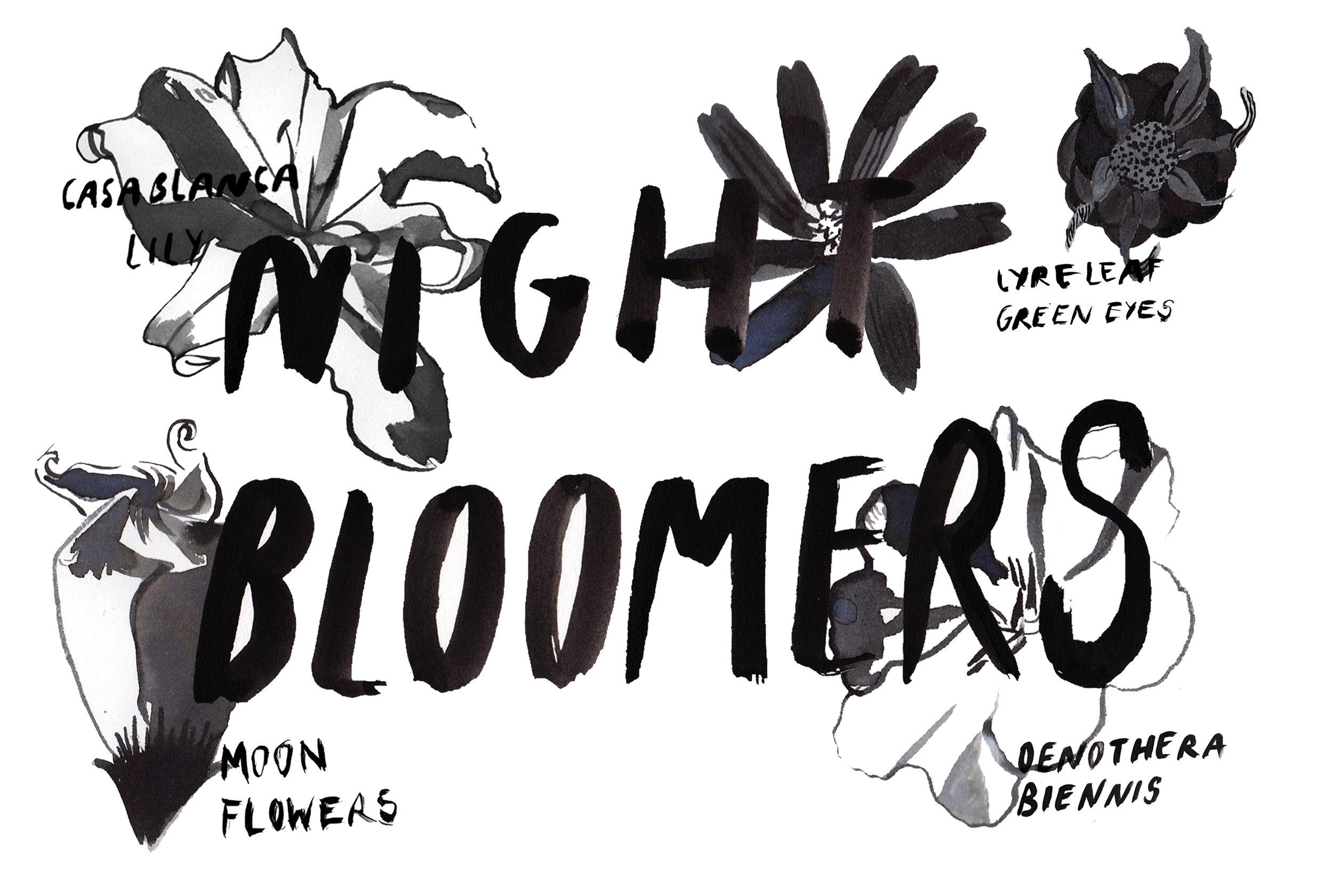 nightbloomers copyfortumblr.jpg