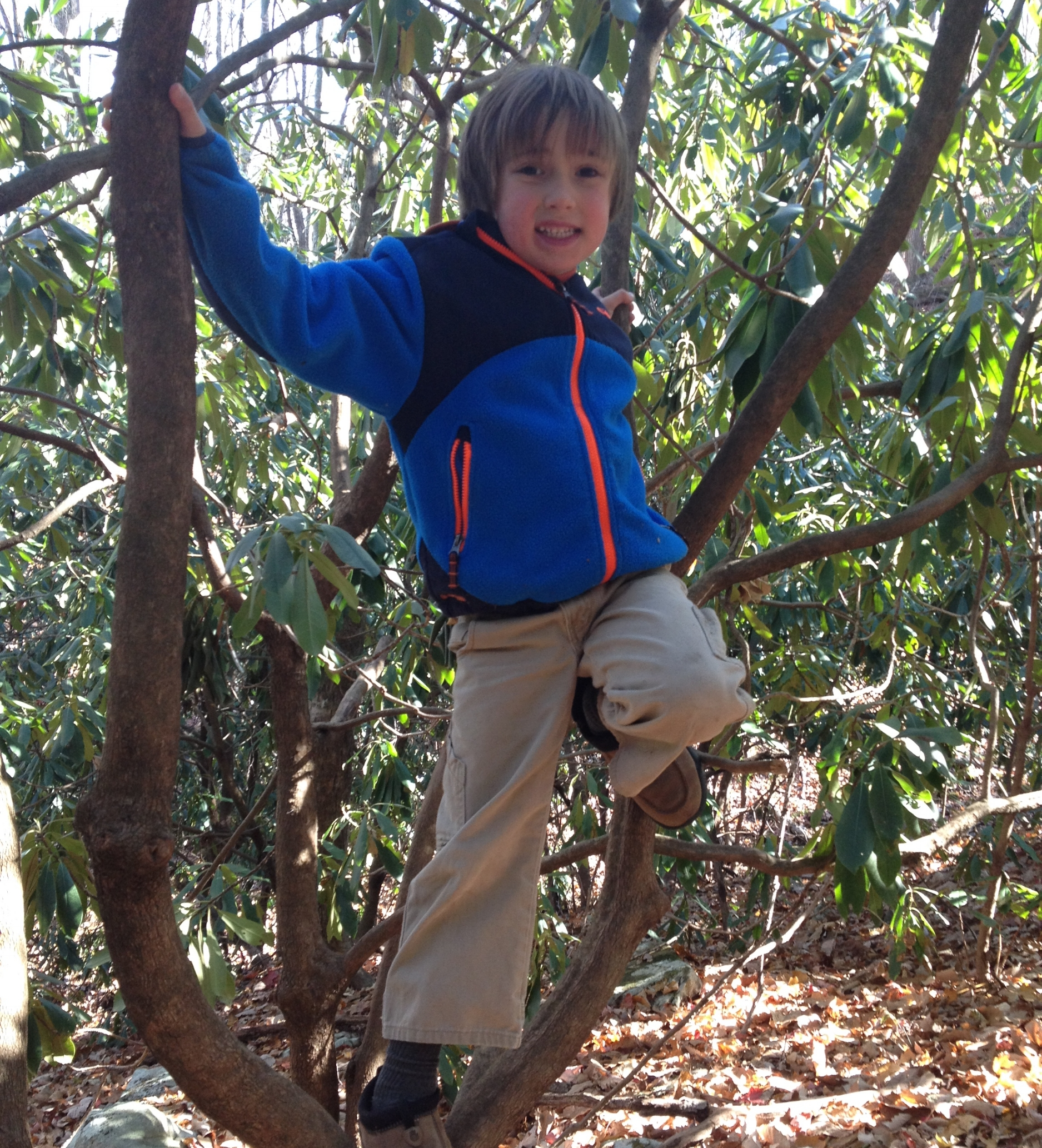 The rhododendron forests surrounding the classroom provide ample opportunity for climbing.