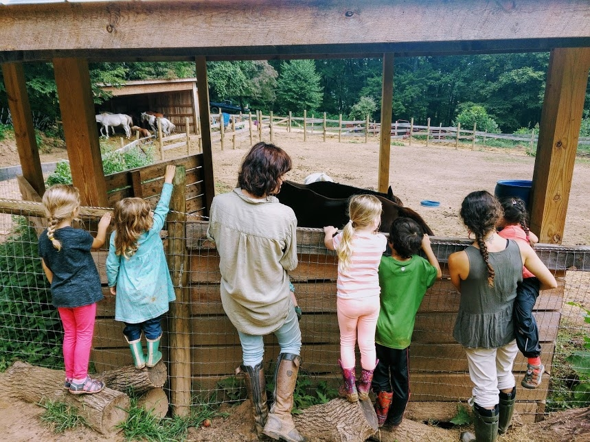 Visiting the animals on our farm