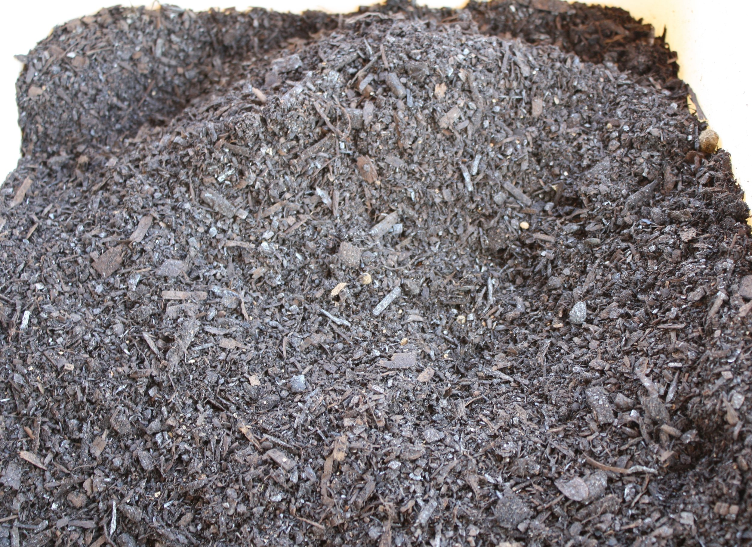 Compost in container.JPG