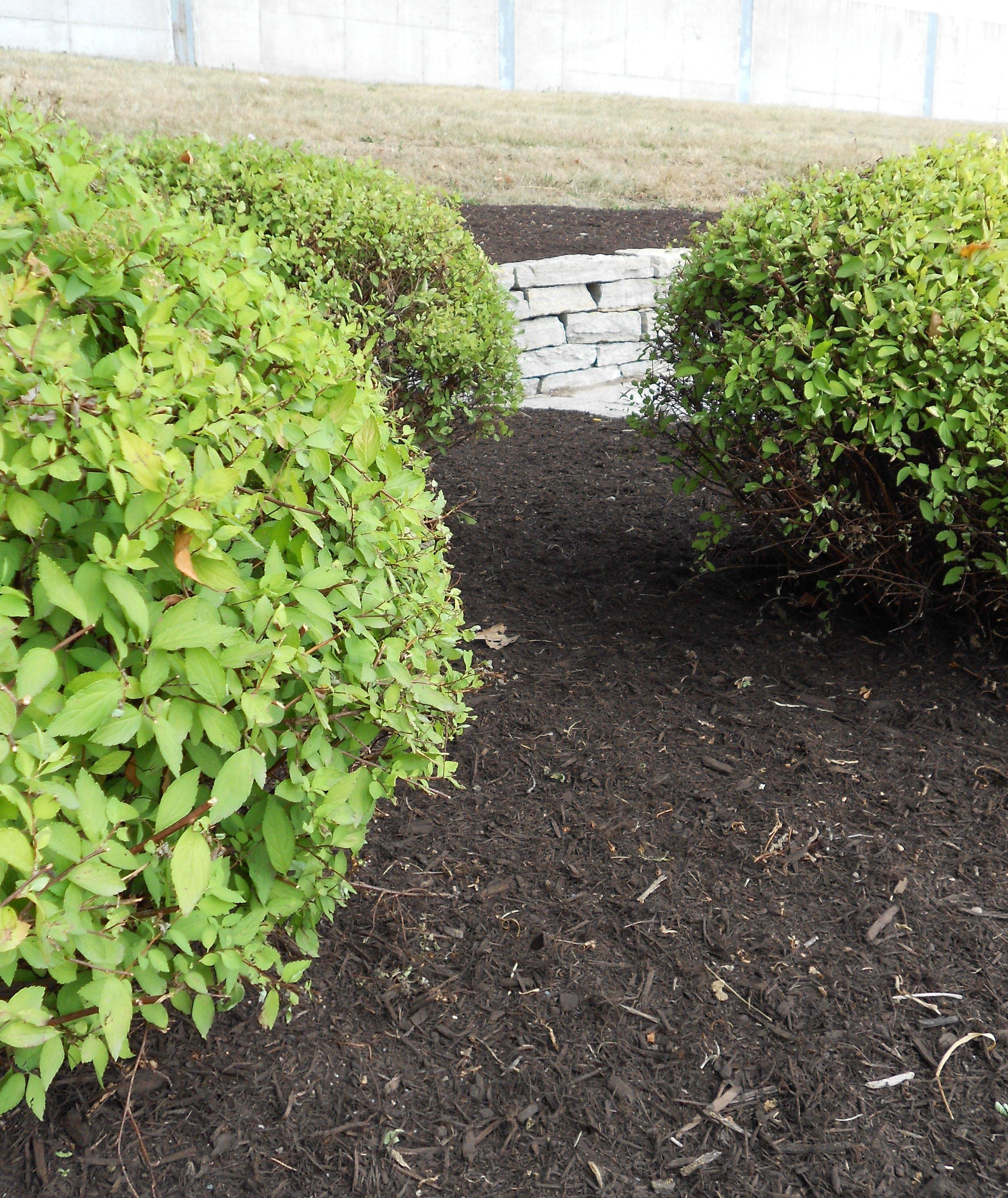Mulchshrubberpic.JPG