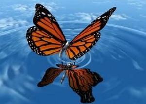 butterflywater.jpg