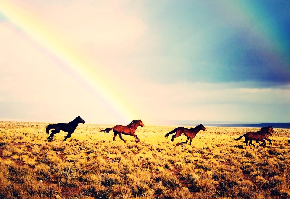 wild-horses-2239420_960_720.jpg