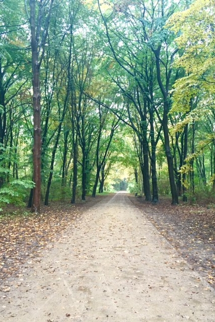 Berlin Path through Woods.jpg
