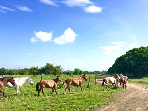 Verathon Costa Rica Horses Picture.jpg