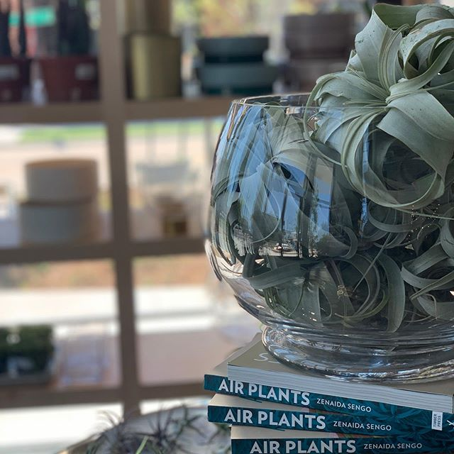 Have you been over to the @plantshoppe, yet? They are one of great, local neighbors! Swing by and take a look at the variety of unique options they have. 🌱🍃🌿