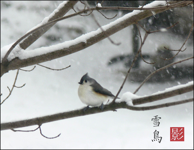 P1110698_titmouse-kanji-158-157.jpg