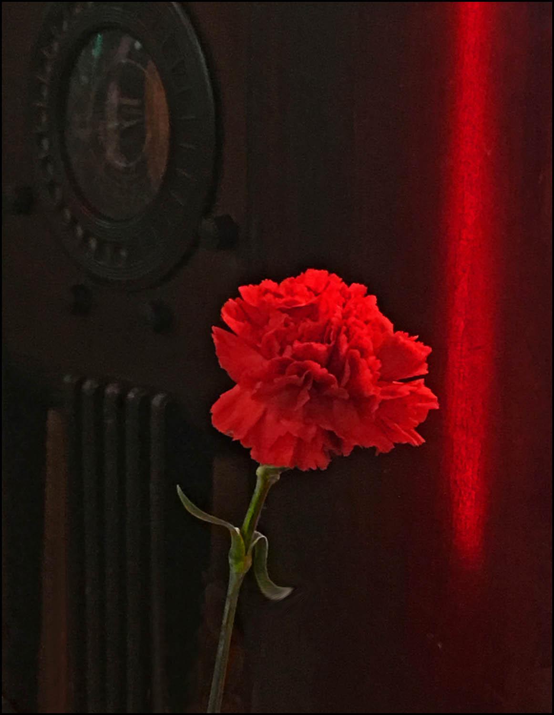 carnation_a_sm.jpg