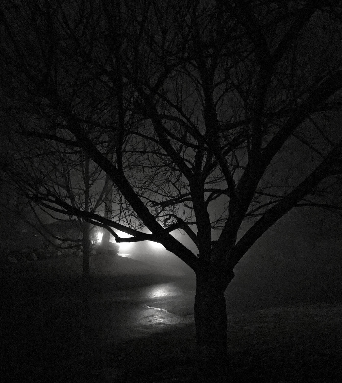 fog_night_sm.jpg