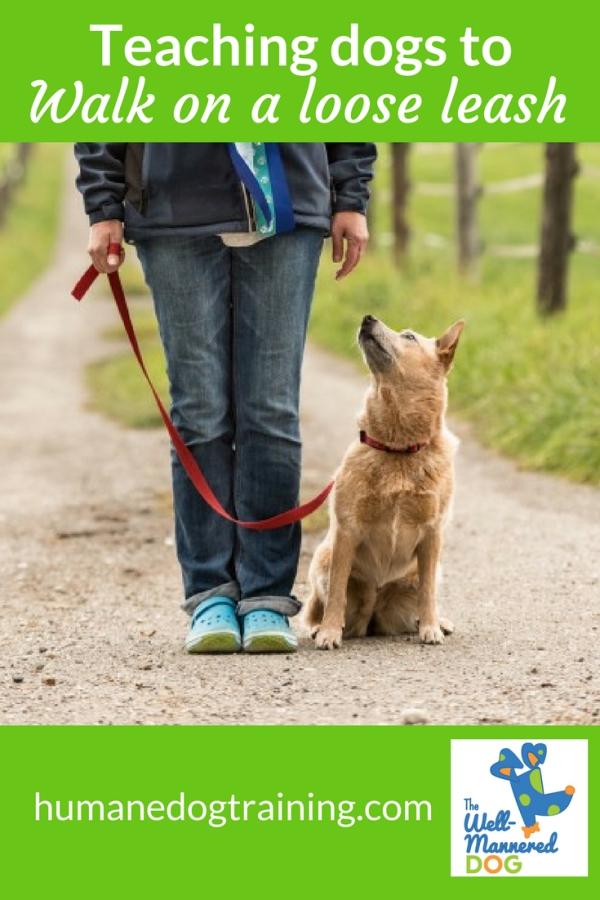 The Well-Mannered Dog, Loose leash Walking, Eugene Oregon