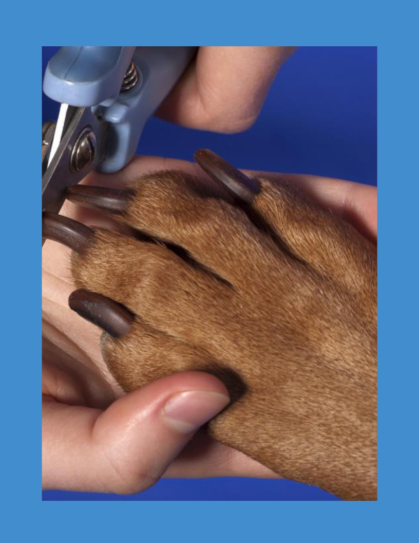 Nailing Nail Care @ The Well-Mannered Dog