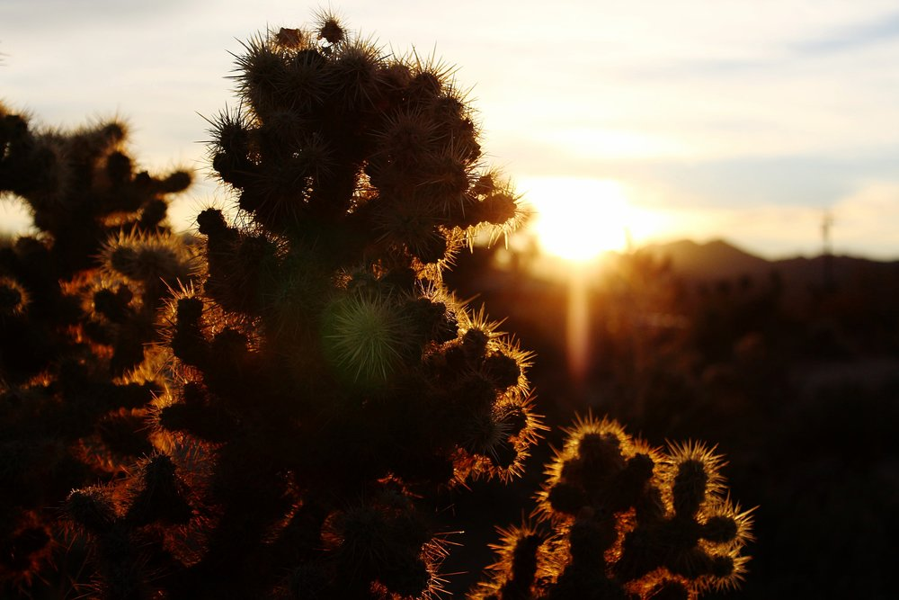 Joshua Tree National Park -