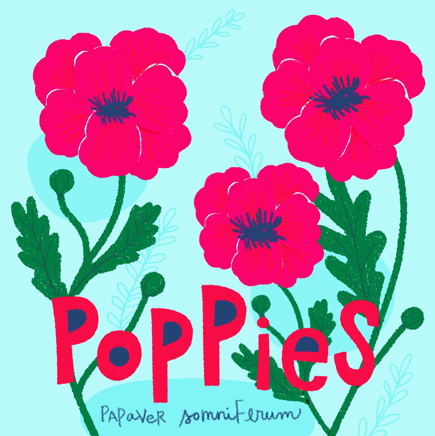 jami darwin poppies.jpg