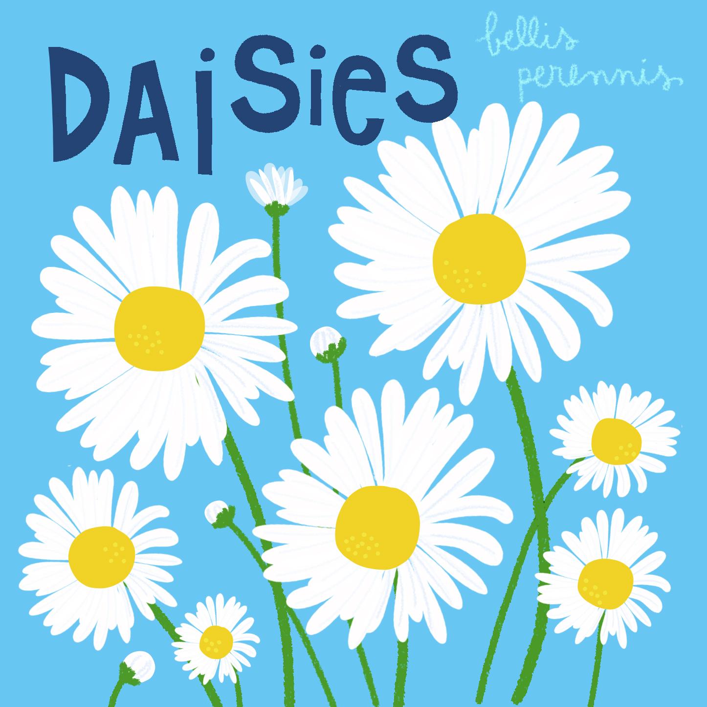 jami darwin daisies.jpg