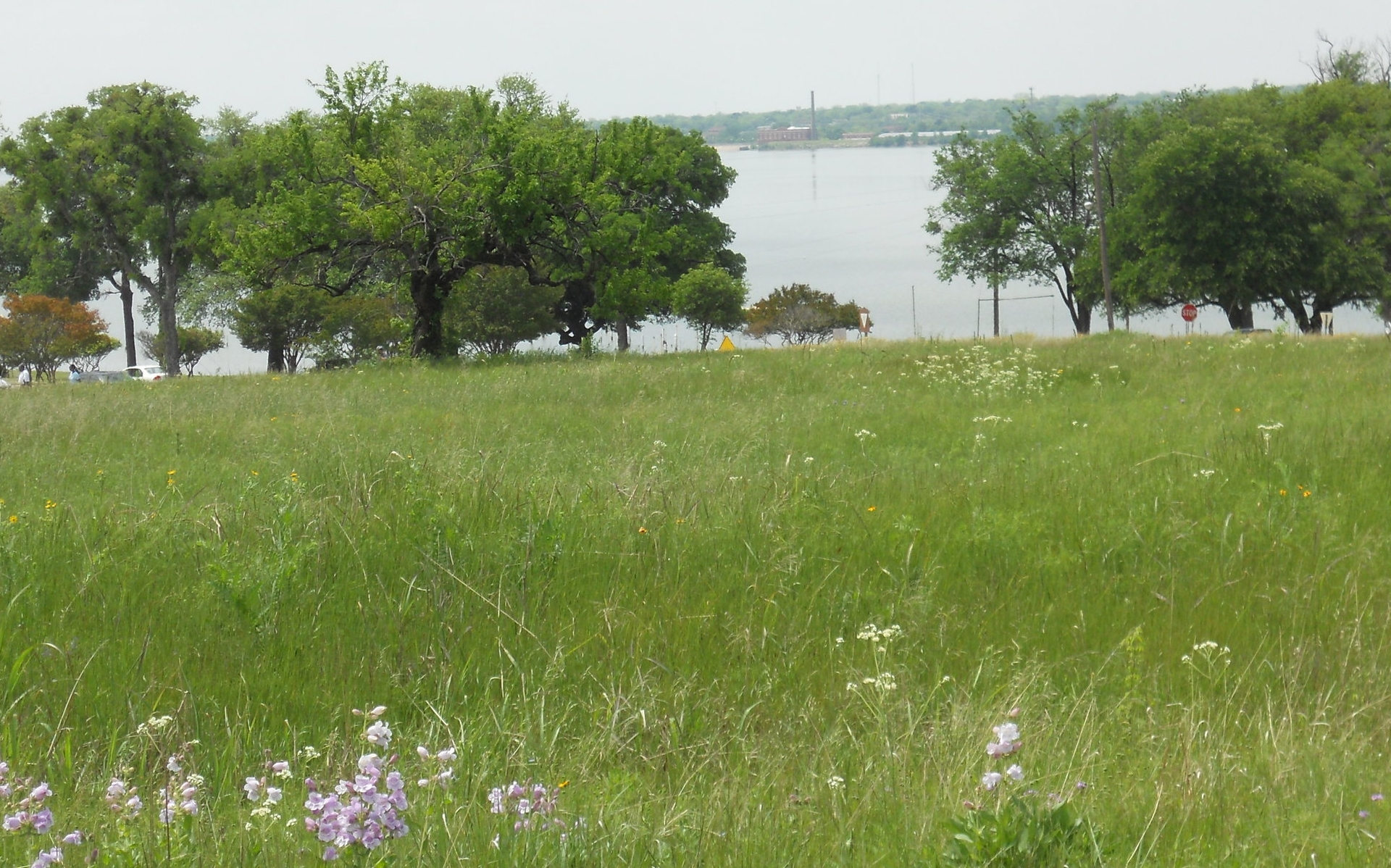 White Rock prairie 4-28-2013   004.jpg