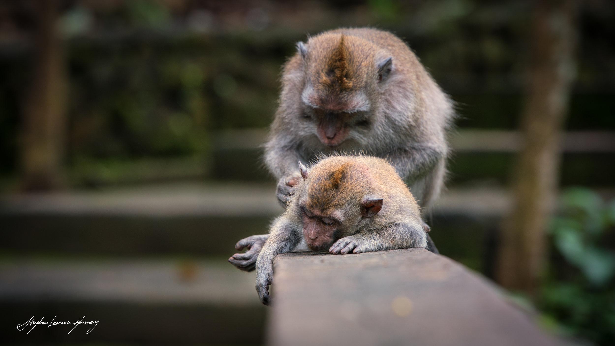 Monkey Care v 2 (1 of 1) copy.jpg