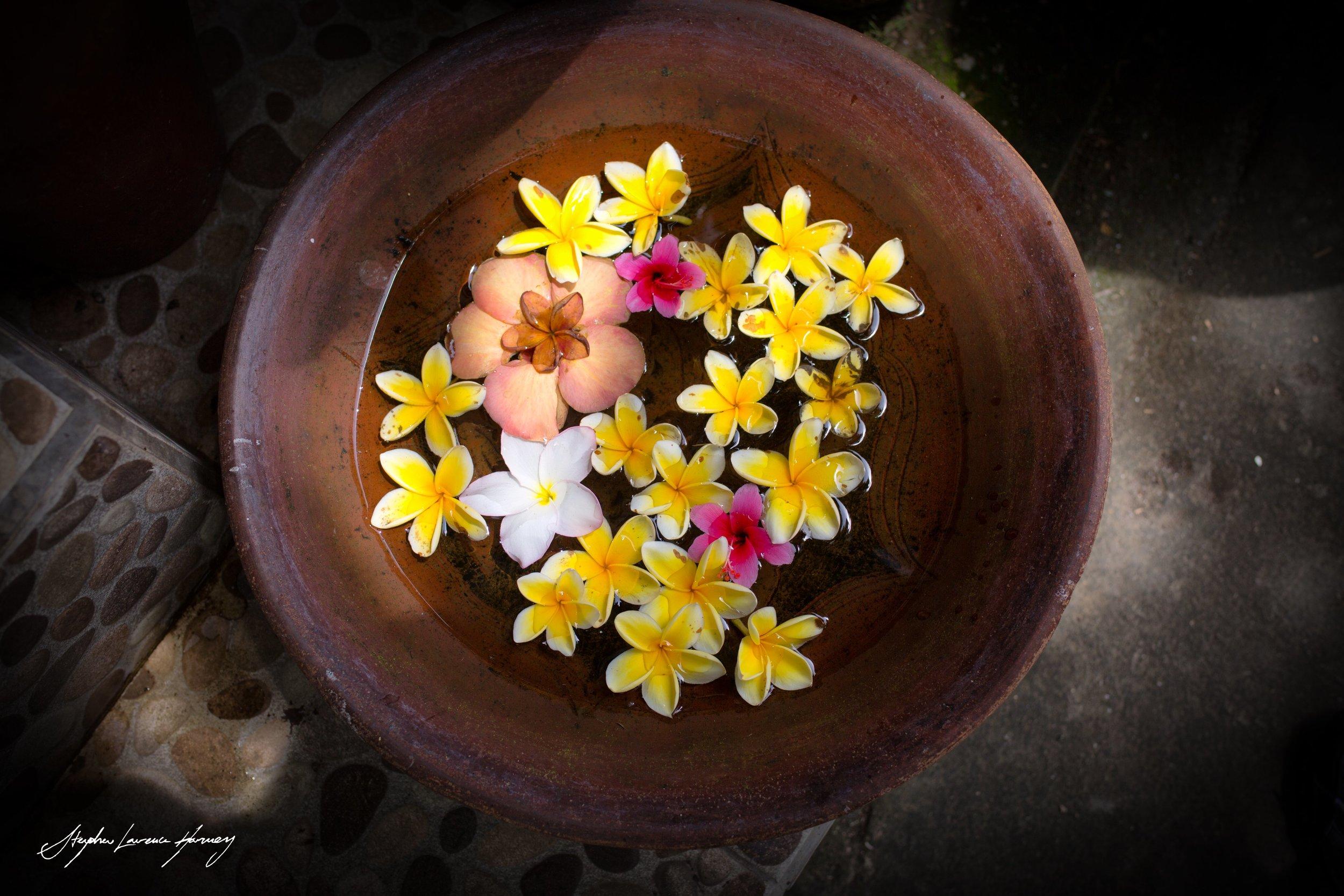 Bali flower beauty 2 (1 of 1) copy.jpg