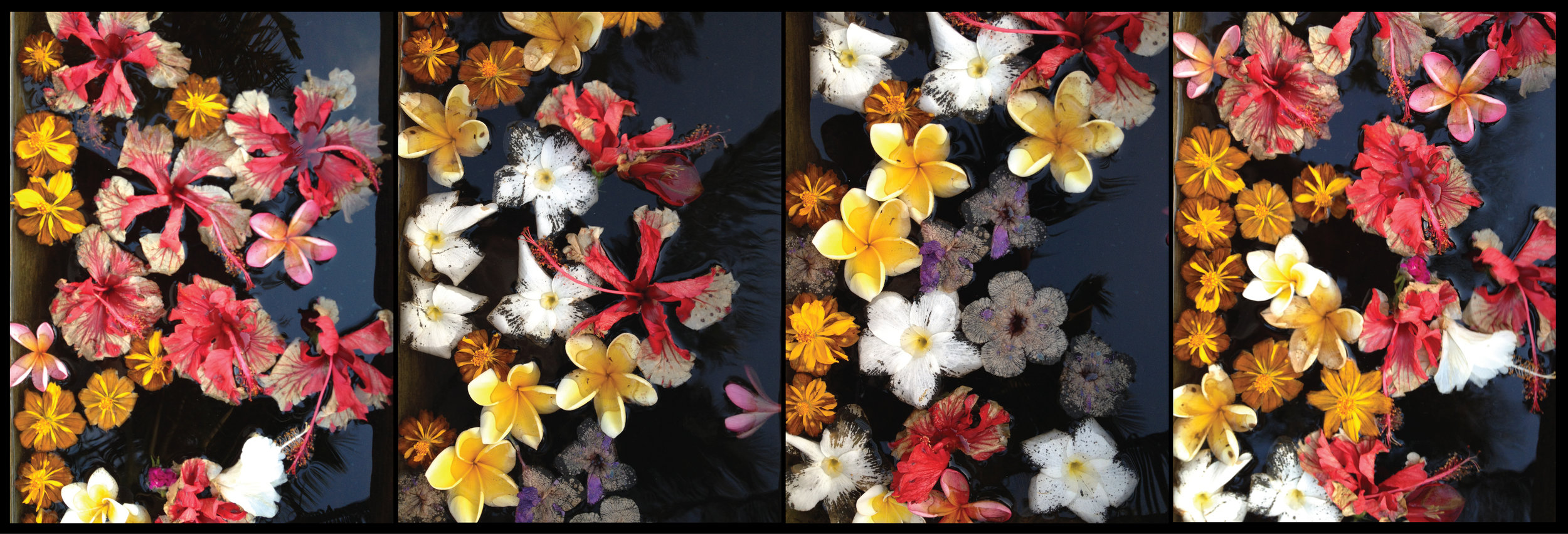 Bali Petals 2 copy 2.jpg