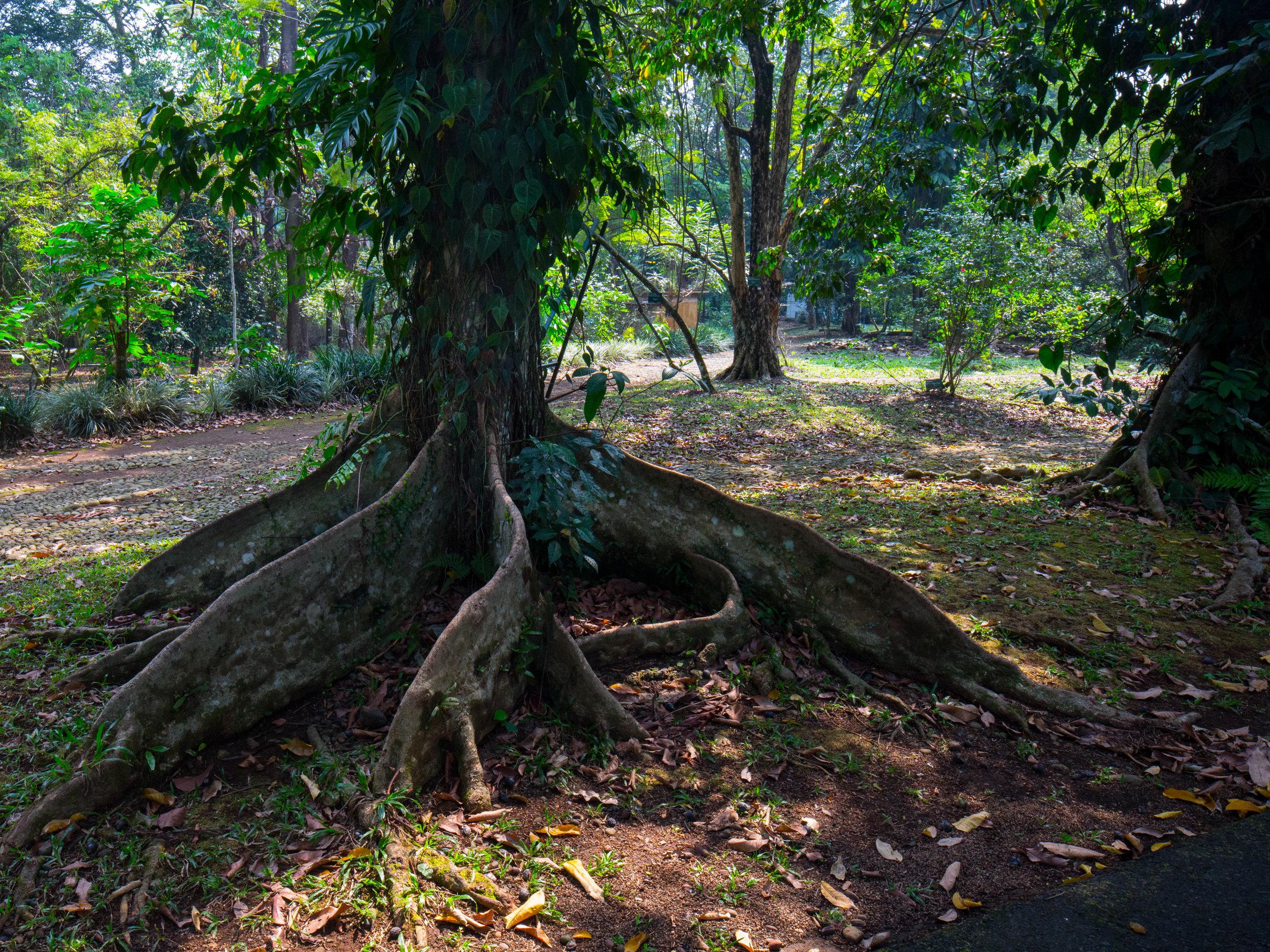 Big Roots (1 of 1).jpg