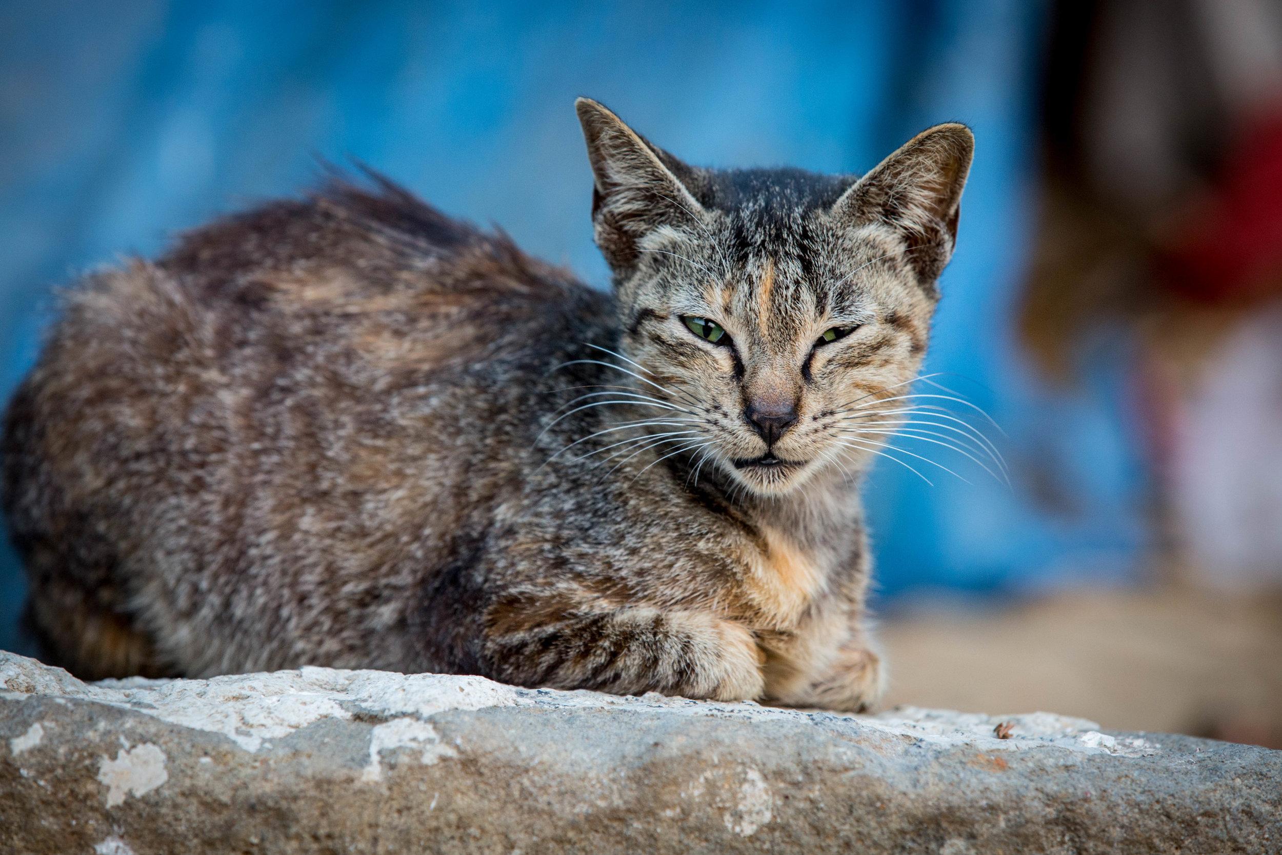Cat Chantik (1 of 1).jpg