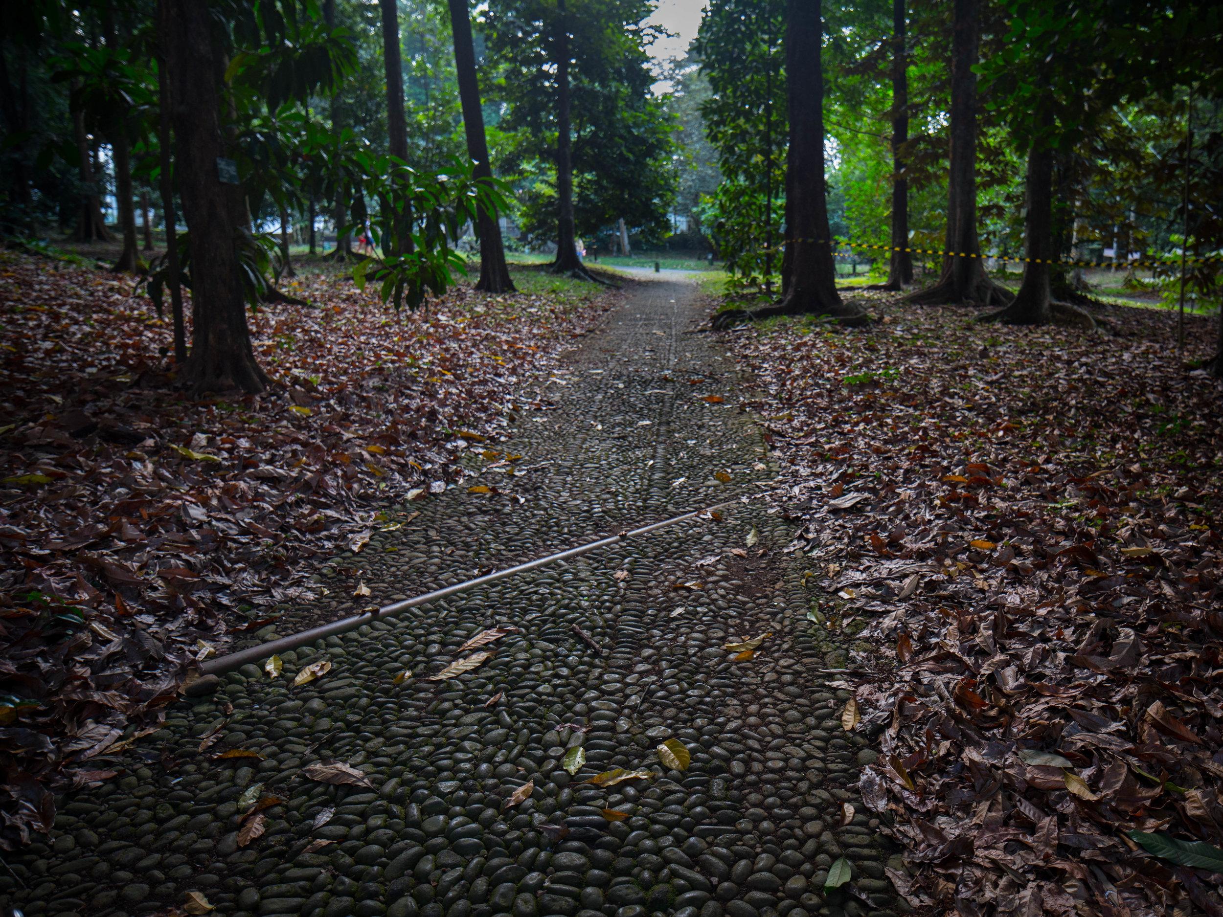 The forest Bogor 2 (1 of 1).jpg