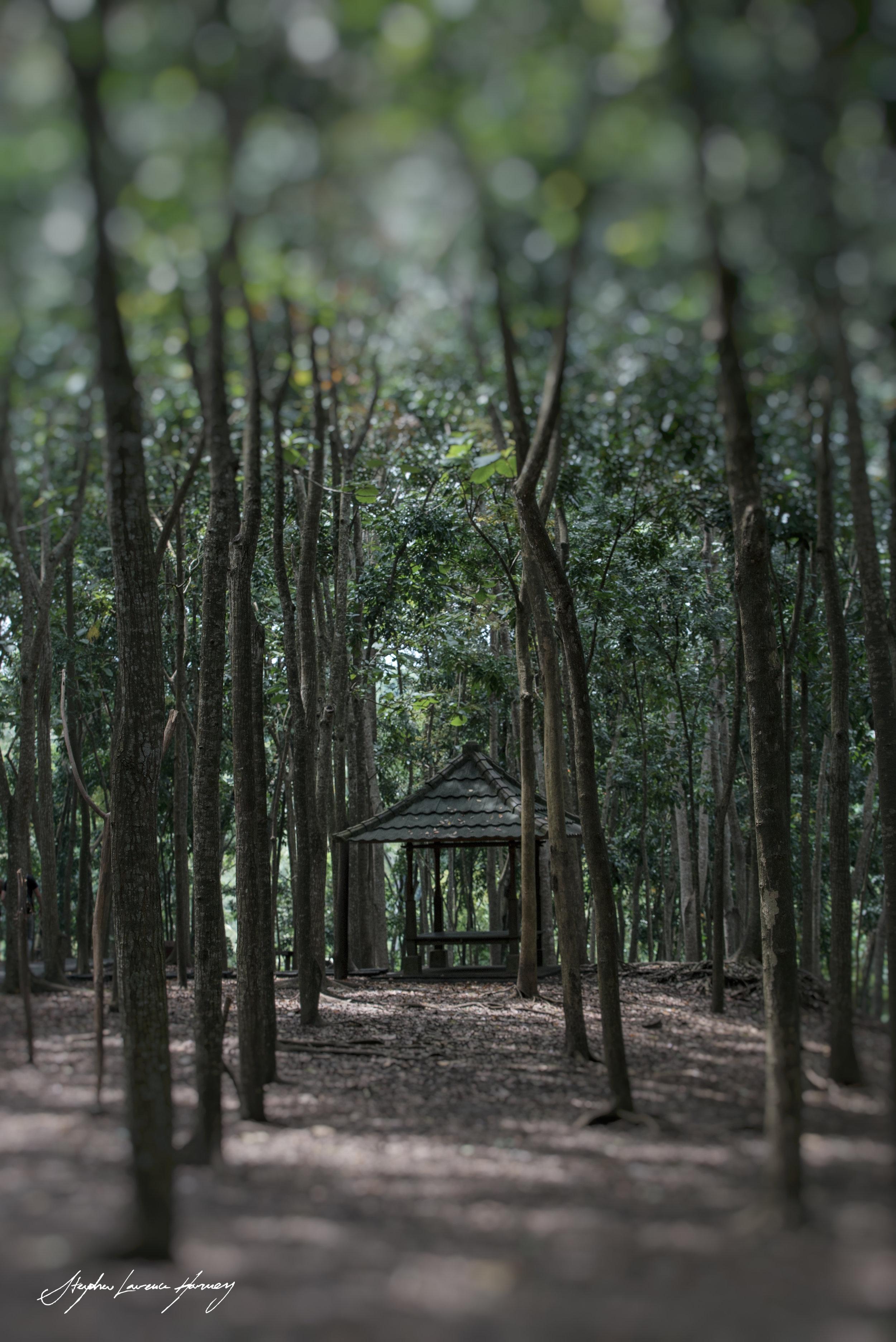 Monkey Forest  (1 of 1).jpg