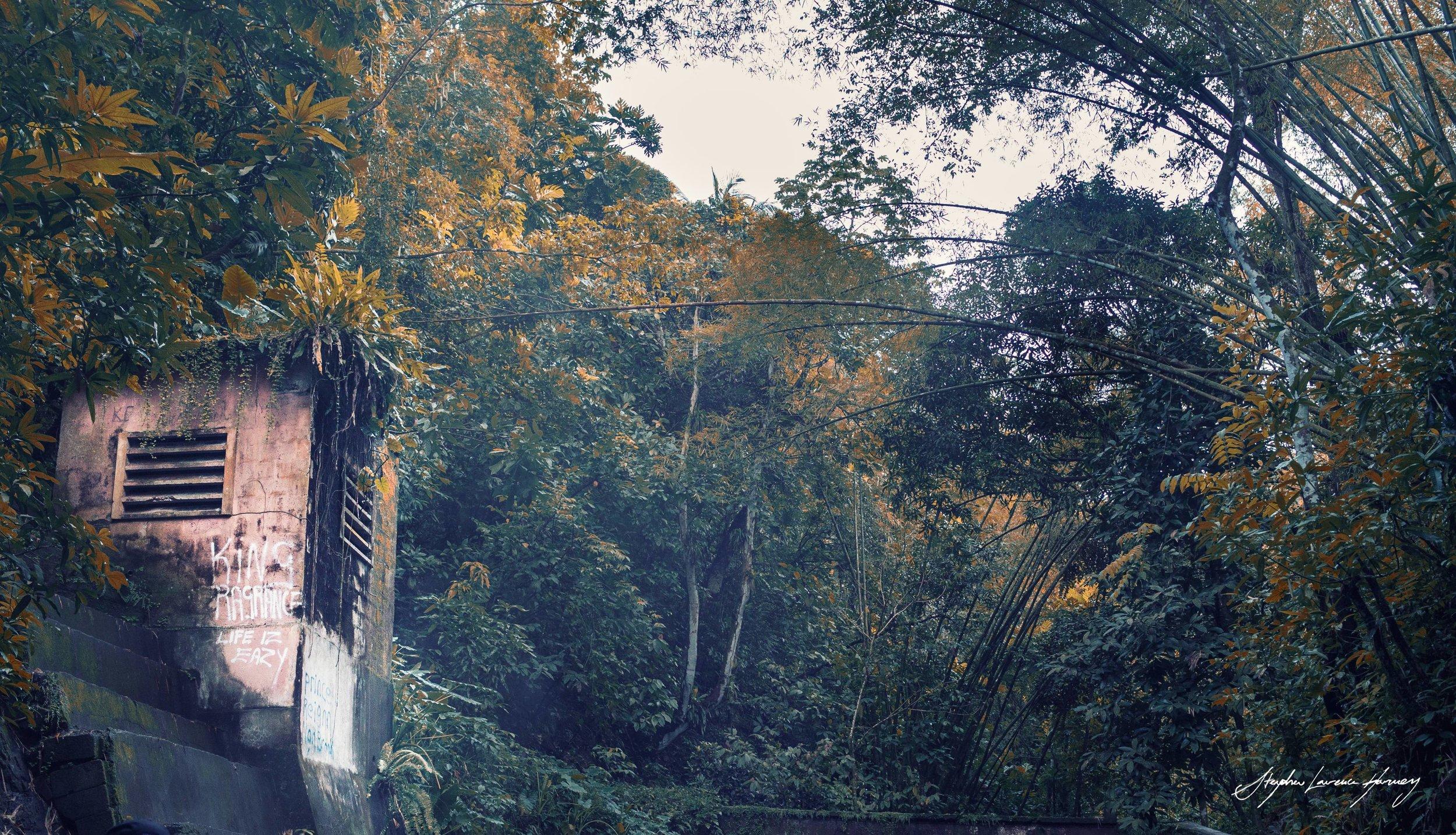JaMaicAn Jungle (1 of 1) copy.jpg