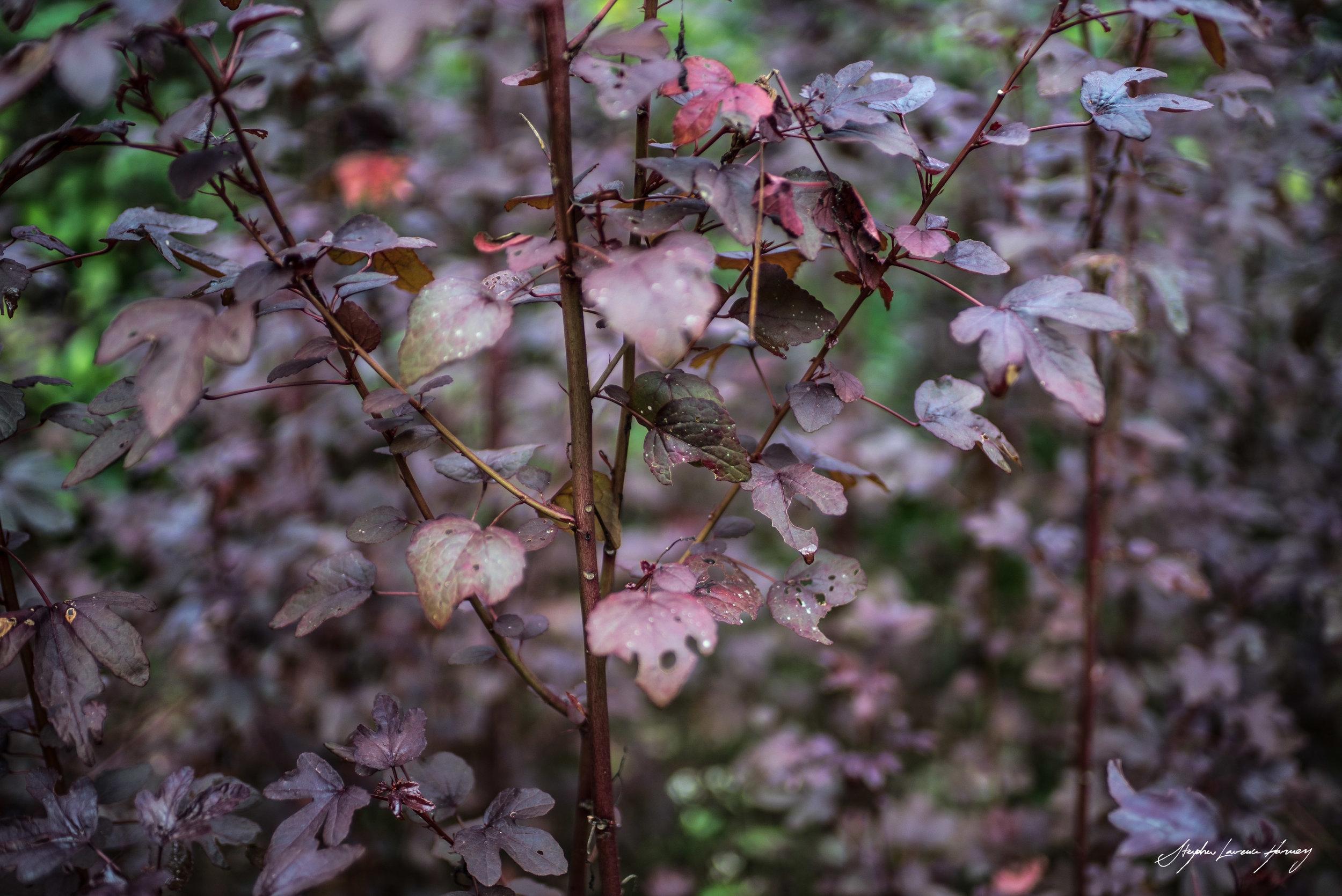 Purple Plant (1 of 1).jpg