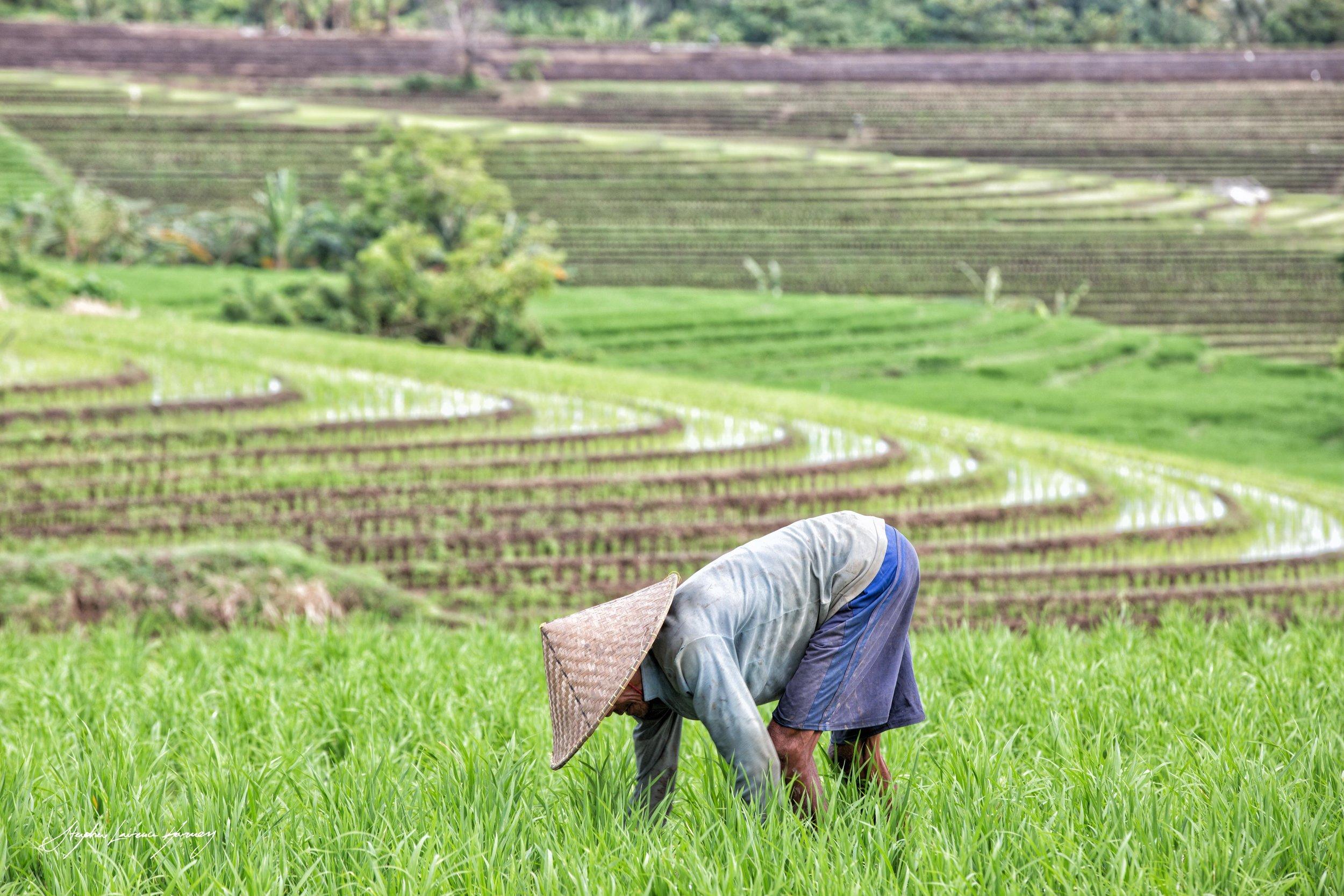 Bali Field worker (1 of 1).jpg