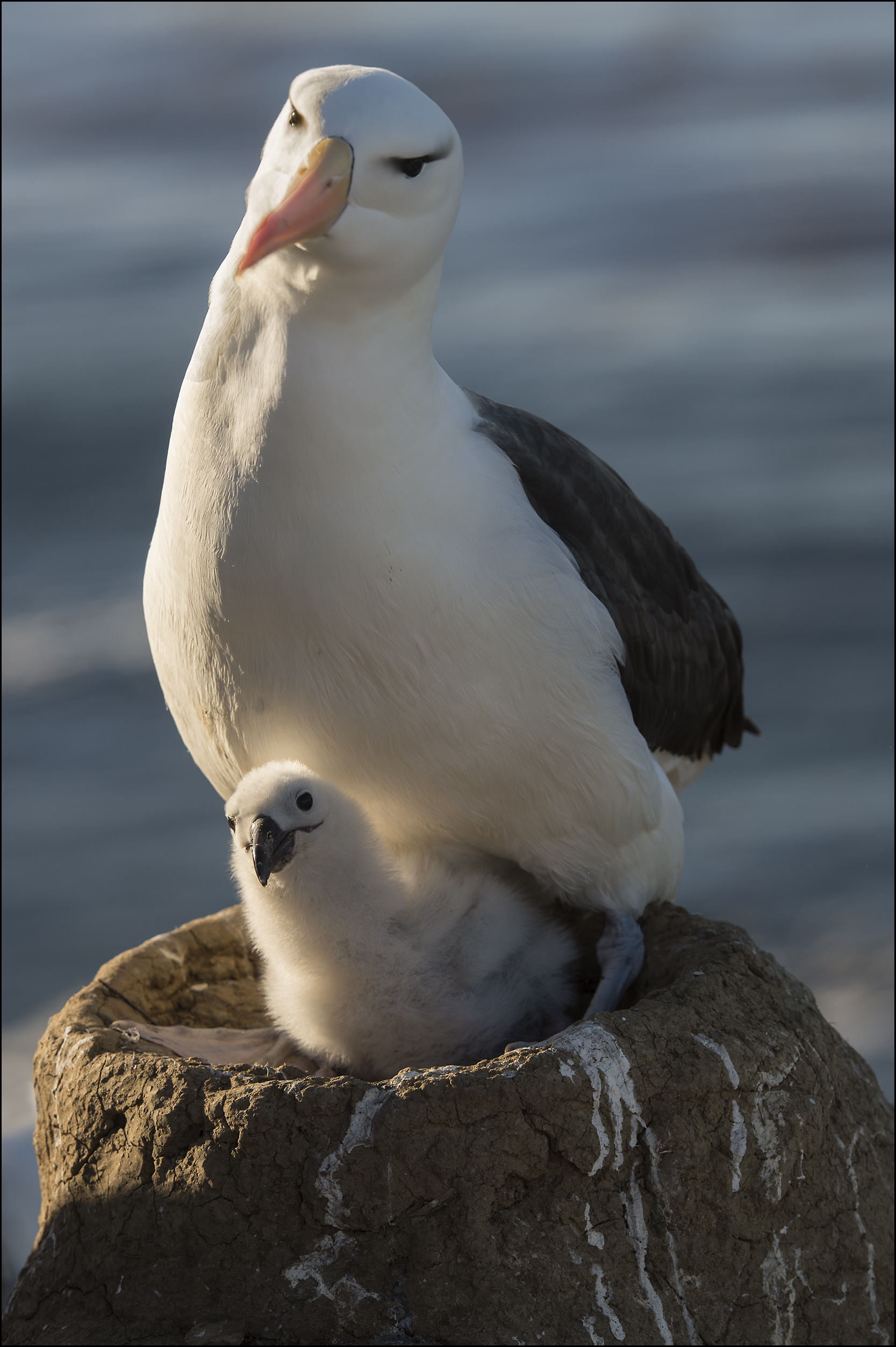 albatros1.jpg