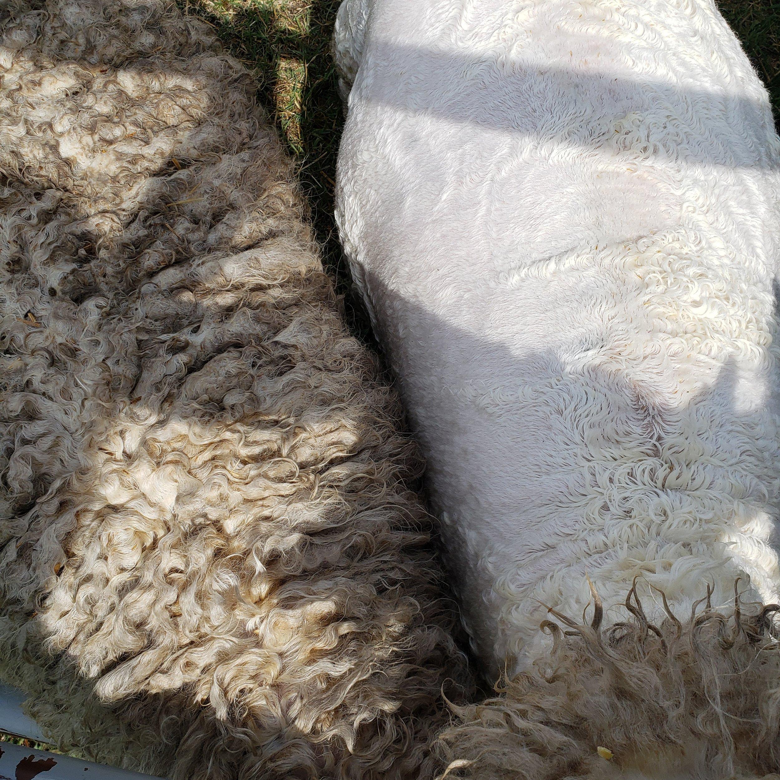 Full Fleece vs Sheared