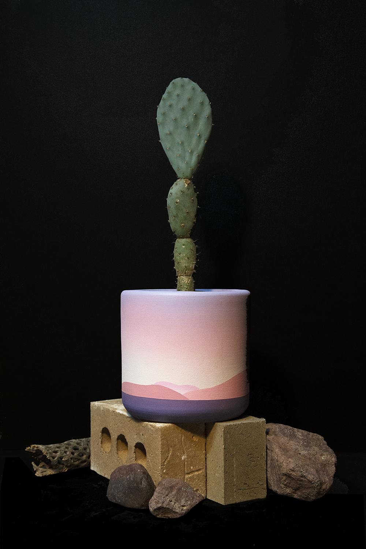 public_land_Store_sacramento_maxwell_mcmaster_planter_cactus.jpg