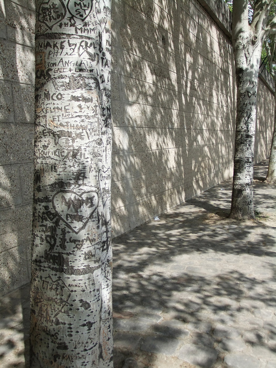 Deborah-Koenker-Visual-Artist-Vancouver-Trees-Tree