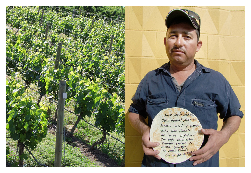 Deborah-Koenker-Visual-Artist-Vancouver-grapes-and-tortillas