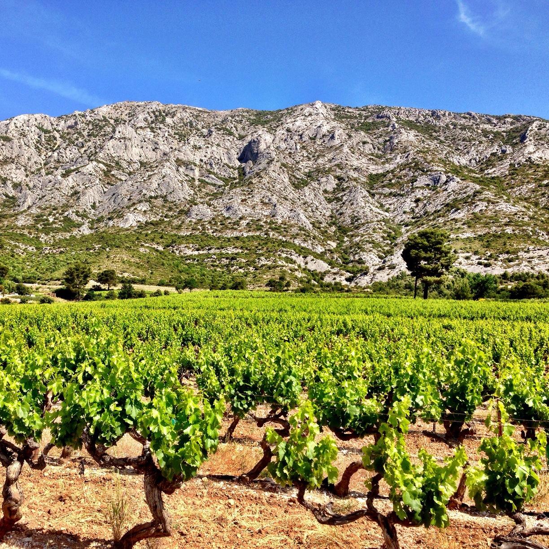 Chateau Sainte-Lucie - Wer kennt die sommerlichen Rosés aus Südfrankreich nicht. Frisch, fruchtig, lachsfarben und leicht.Die Weine der Domaine Sainte-Lucie liegen in den heissen Alpen der Côte-de-Provence. Sie bestechen durch ihre einzigartigen Düfte von Pfirsich, Himbeeren, Zitrusfrüchten und Sommerblumen.