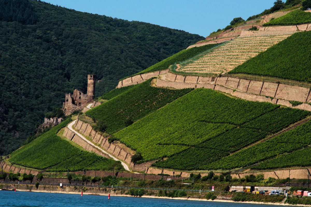 Dr. Corvers-Kauter - Die Sonne brennt, der Nordwind fehlt, die Südhänge sind steil und der Riesling reift.Wir sind nicht im Süden Spaniens oder in Australien,sondern Mitten in Deutschland. Eines der nördlichsten Weinbaugebiete der Welt ist Ursprung von hervorragenden Rieslingen. Dr. Corvers-Kauter wird diesem Merkmal mehr als nur gerecht.Von Oestrich-Winkel bis zum letzten Zipfel des Rheingaus, den Rüdesheimern Berglagen erstrecken sich die Weinberge von Dr. Matthias und seiner Frau Brigitte Corvers-Kauter.Ihre Rieslinge bestechen durch ihre erfrischende Mineralität, der knackigen Säure, welche erstaunlich balanciert ausgeglichen wird und mit einer klaren und feinen Aromatik ihren langen Abschluss findet.