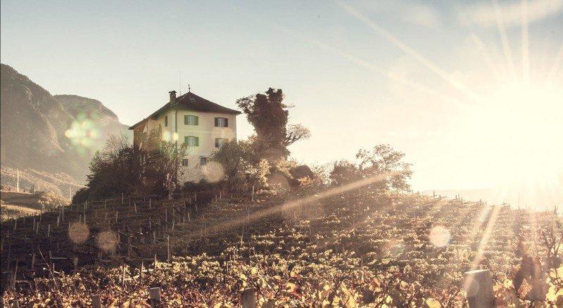 Tenuta Baron Longo - Die Familie von Longo überliess Jahrzehnte lang ihre Reben den benachbarten Bauern. Bis zu dem Zeitpunkt als Anton von Longo sich diesem Brauch widersetzte und entschied die Trauben selber zu keltern.ZUM GLÜCK!Seit 2015 wird unter dem Können vom jungen Baron gekeltert und was dabei gelingt, ist wahrhaftig phenomenal! Seine Weine sind weich, vollmundig und komplex in Würze und Frucht. Ein sehr harmonisches Erlebnis.