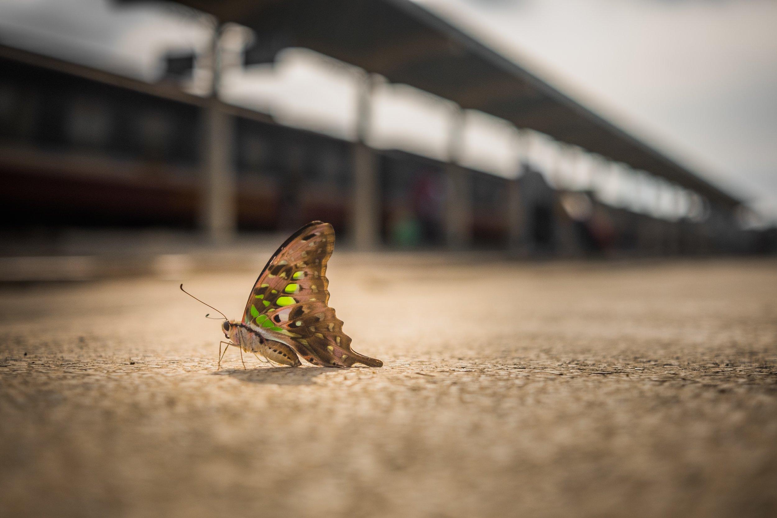 Butterflieger