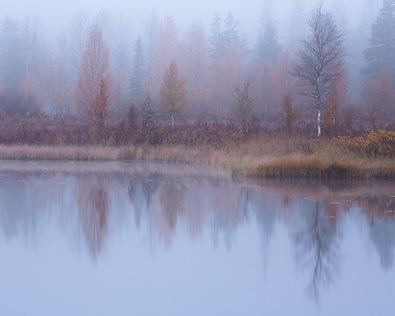 Nebeliger Morgen am Toraslampi, Finland.