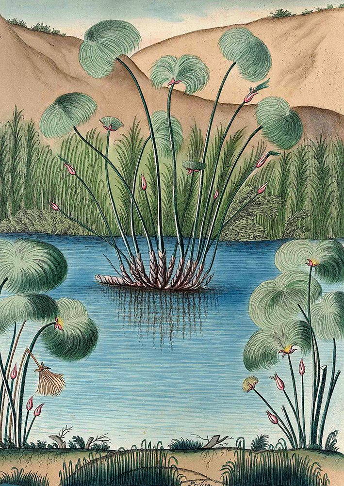 Papyrus Plants - the Herculaneum Manuscripts -print WEB.jpg